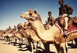 cammelli-indiani-da-combattimento.jpg